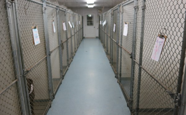 Inside dog run